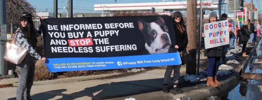 anti puppy mill protesters rally against american dog club