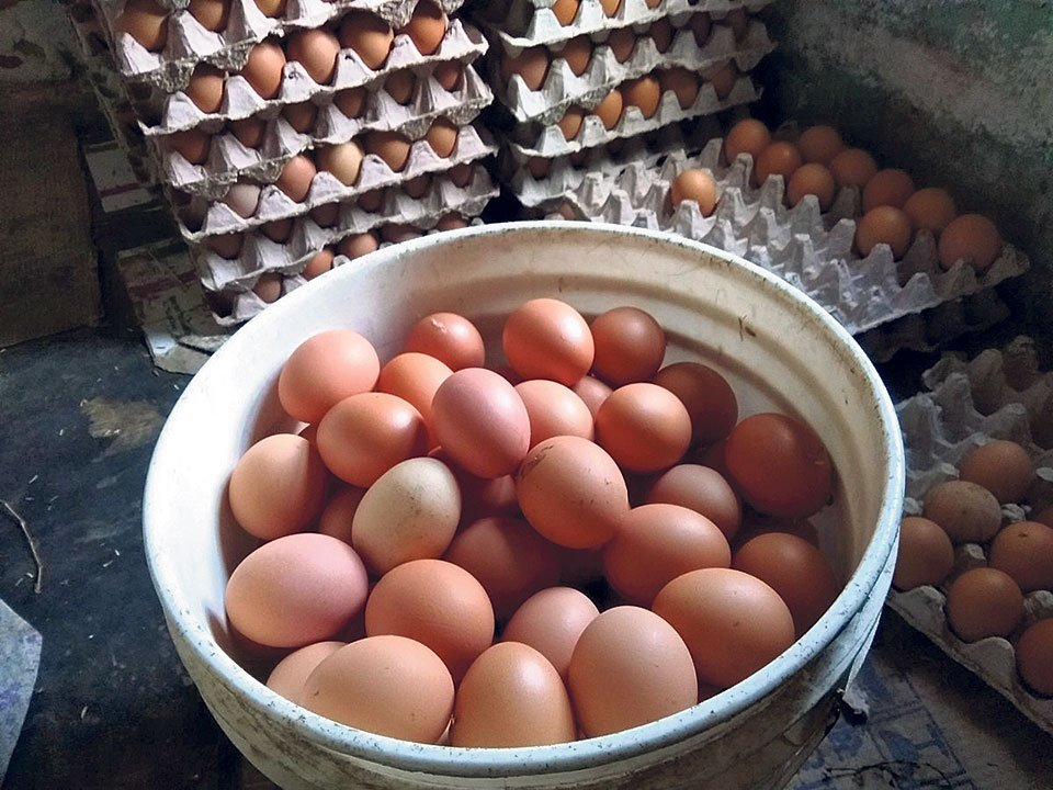 Eggs selling below cost of production, farmers say ...
