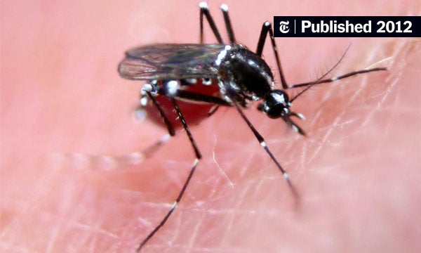for mosquitoes rain isnt a flight hazard the new york