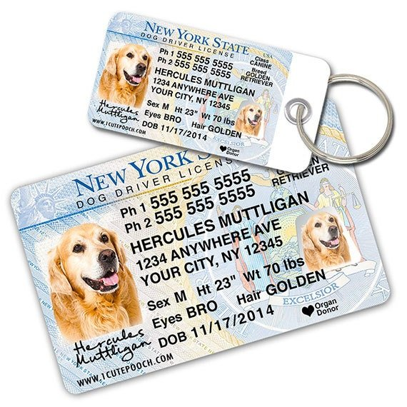 new york driver license custom pet id tags and wallet card