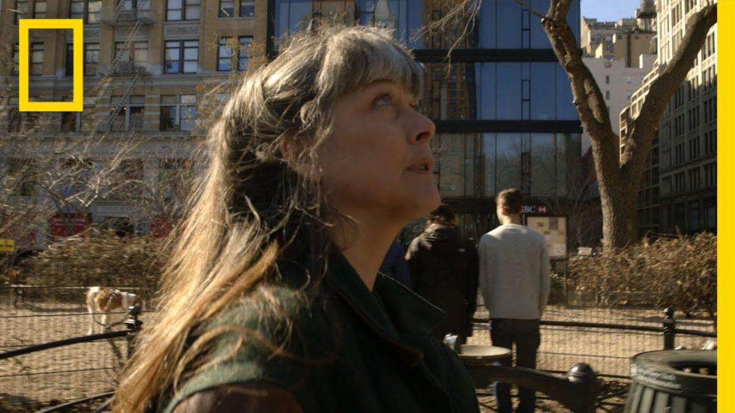 new york wildlife sue in the city youtube
